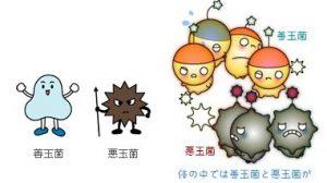 マイクロビオーム  microbiome という言葉をご存知ですか?
